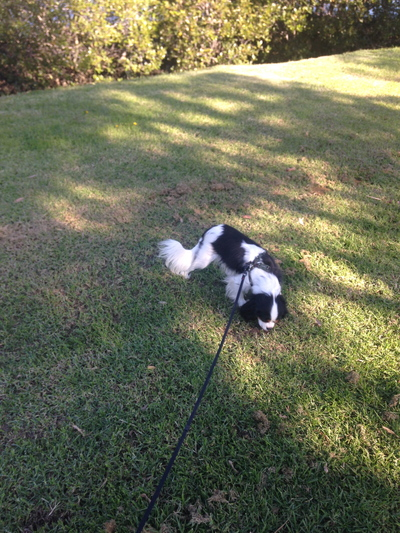 best places to walk your dog in sydney, walking your dog in sydney