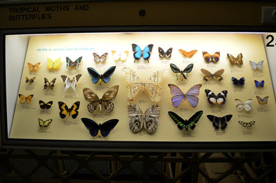 Butterflies from the Birds & Insects exhibit