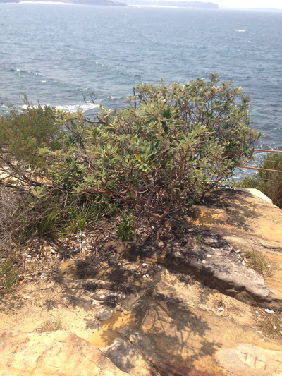 cabbage tree bay aquatic reserve, cabbage tree bay aquatic reserve sydney nsw, cabbage tree bay aquatic reserve manly
