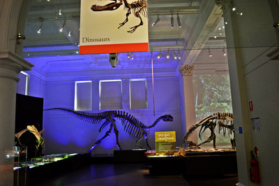 The dinosaur exhibit, including non-tyrannosaurs
